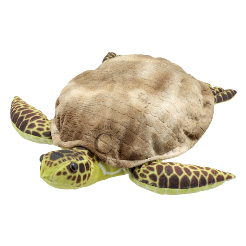 Turtle - Large Creatures